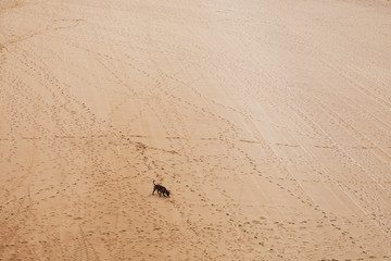 Dog and footprints.