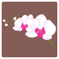 delicate orchid branch for your greeting cards