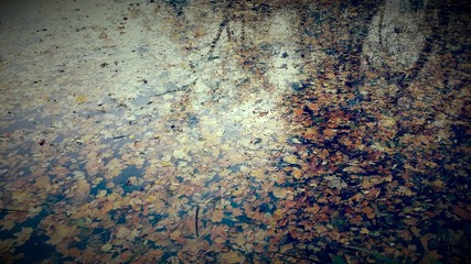 Autumn in park - leaves on water