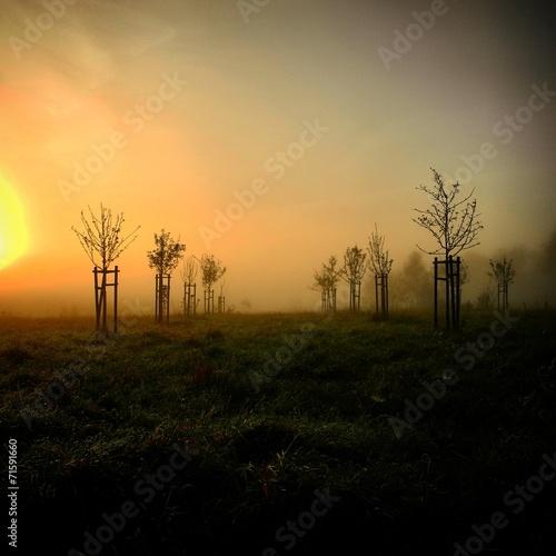 canvas print picture Morgen im Nebel