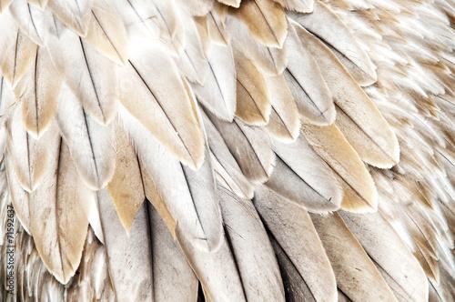 Papiers peints Oiseau Bird feathers