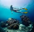 Leinwanddruck Bild - Free diver