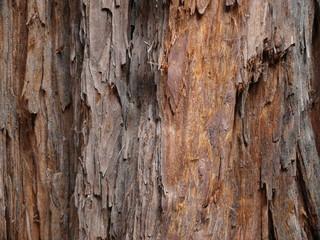 Rinde Textur Mammutbaum