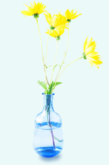 Beautiful flowers in vase isolated on blue background