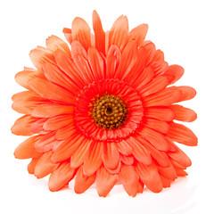 Orange silk Gerber flower