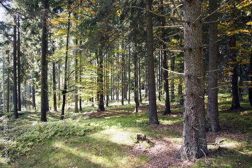 canvas print picture Herbstlicher Mischwald