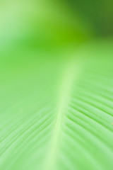 Closeup of leaf in shallow depth of field.