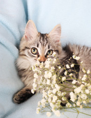 gray kitten with flowers