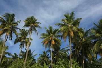 maldives, sea, palm and sky