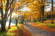 Lake pathway with yellow leaves - 71598827