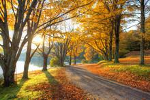 """Постер, картина, фотообои """"Lake pathway with yellow leaves"""""""