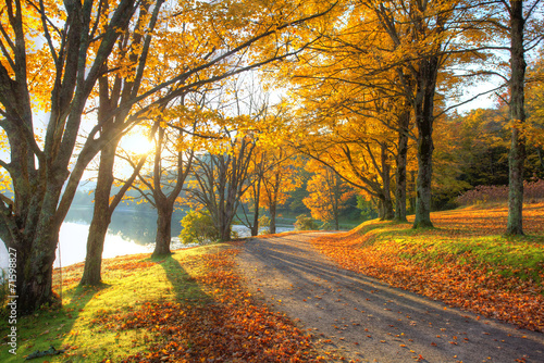 Poster Bossen Lake pathway with yellow leaves