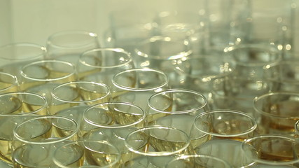 Plurality Wine Glasses with Champagne