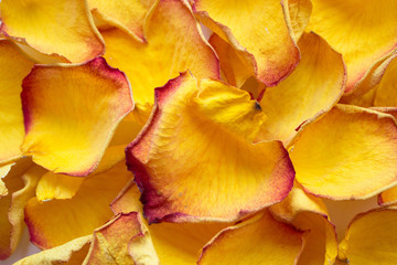 background of dried yellow rose petals