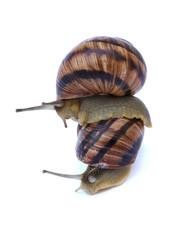 Take me snail