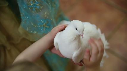 Hand Stroked White Dove