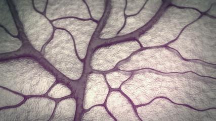 Capillary, brain