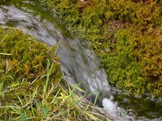 sorgente d'acqua su roccia con muschio