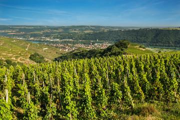 vignoble de la vallée du Rhône FRANCE
