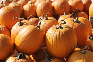 lot of pumpkins