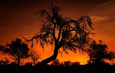 Bäume vor leuchtendem Nachthimmel