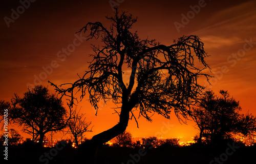 canvas print picture Bäume vor leuchtendem Nachthimmel