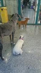 Perros esperando a sus dueños
