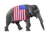 elephant carries a flag USA