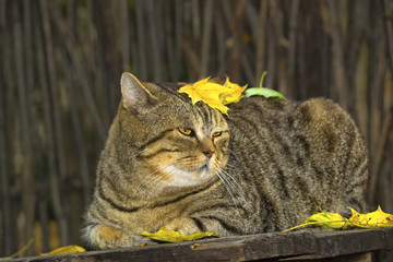Толстый кот во дворе