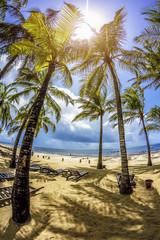 palme in africa