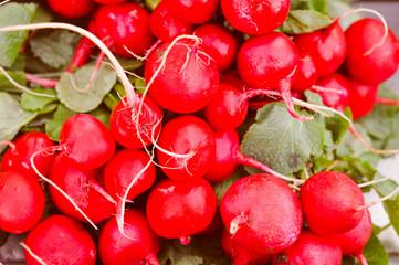 Retro look Radish vegetables