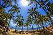 canvas print picture - spiaggia di palme