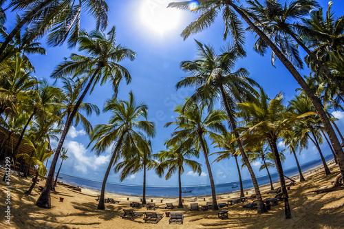canvas print picture spiaggia di palme