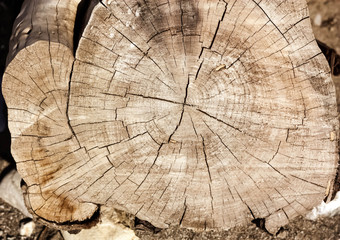 Tree Cross Section as Wooden Background