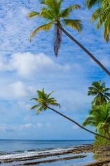 Rest in Paradise - Malediven - Schräge Palmen, Himmel und Meer