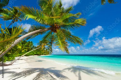 Rest in Paradise - Malediven - Palmenstrand, Himmel und Meer - 71614892