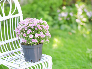 Lilac flowers on wicker chair on green garden background