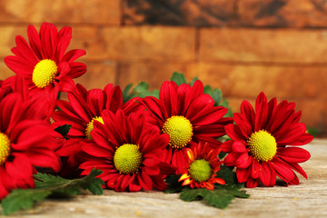 Red chrysanthemum on wooden background