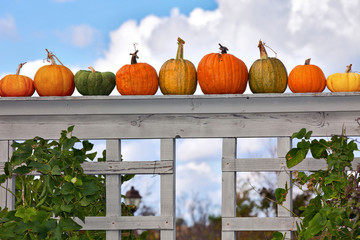 Pumpkins on the sky background