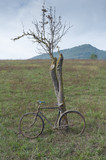 Antique or retro oxidized bicycle outside