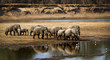 Large elephant herd crossing river in arid landscape