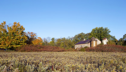 Old barn and autumn foliage