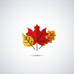 autumn leaves icon background
