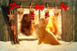 canvas print picture - Weihnachten Katze