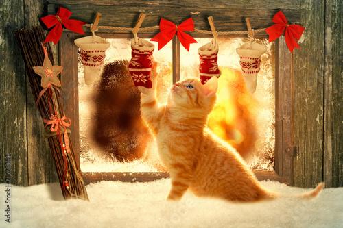 canvas print picture Weihnachten Katze