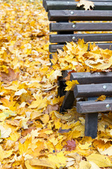 Park bench in fall closeup