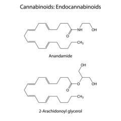 Endocannabinoids - signaling molecules