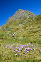 Flowering valley in the autumn Atlantic Pyrenees