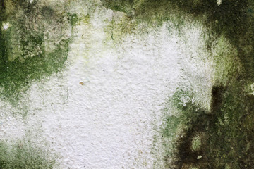 Moss on concrete wall texture background