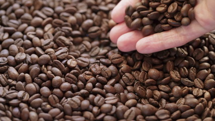 hand checking coffee beans closeup, made from raw